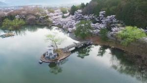 2016年 滋賀県・湖北の桜 ドローン空撮